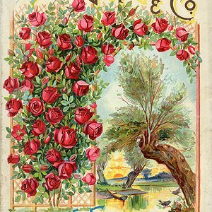 Old time seed catalog cover.